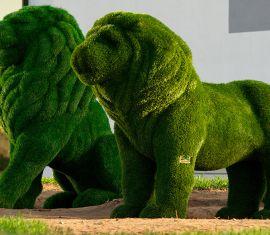 Две фигуры львов появились в Витебске у торгового центра «Беларусь».